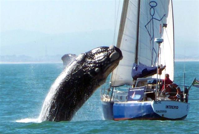 Click image for larger version  Name:ss-100721-whale-02.grid-8x2.jpg Views:98 Size:33.9 KB ID:17896