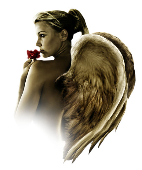 Click image for larger version  Name:angel wings.jpeg Views:82 Size:46.2 KB ID:18322