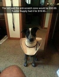 Click image for larger version  Name:dog.JPG Views:255 Size:120.4 KB ID:183798