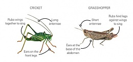 Click image for larger version  Name:Crickets.jpg Views:232 Size:19.3 KB ID:186488