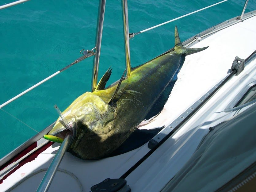 Click image for larger version  Name:fish.JPG Views:82 Size:90.6 KB ID:187724