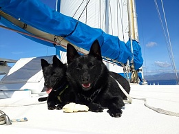 Click image for larger version  Name:Zotke and Zonne first sailing - web.jpg Views:55 Size:40.9 KB ID:189783