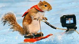 Click image for larger version  Name:Squirrel.jpg Views:180 Size:8.7 KB ID:208342