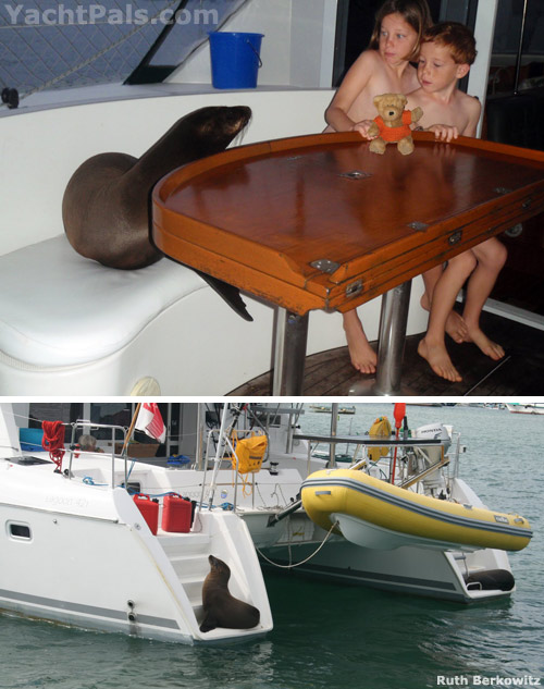 Click image for larger version  Name:boats-sea-lion.jpg Views:117 Size:89.8 KB ID:21756