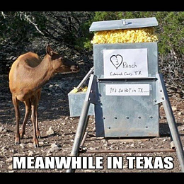 Click image for larger version  Name:Hot in Texas.JPG Views:245 Size:133.7 KB ID:219745