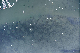 Click image for larger version  Name:eelgrass damage.jpg Views:23 Size:187.1 KB ID:220788