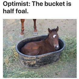 Click image for larger version  Name:halffoal.jpg Views:169 Size:136.8 KB ID:222753