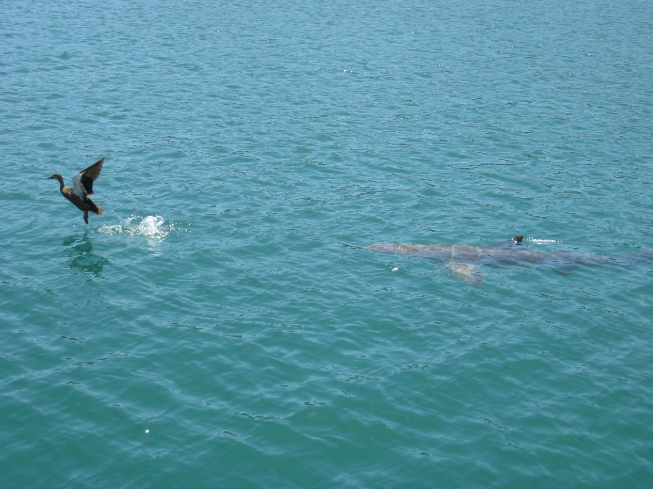 Click image for larger version  Name:Shark.jpg Views:160 Size:423.7 KB ID:22393
