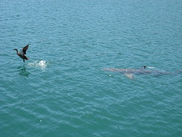 Click image for larger version  Name:Shark.jpg Views:180 Size:423.7 KB ID:22393