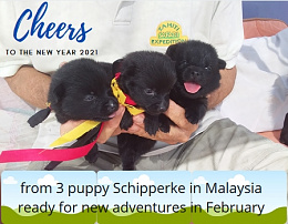 Click image for larger version  Name:3 puppies Happy New Year photo.jpg Views:5 Size:124.2 KB ID:229745