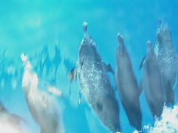 Click image for larger version  Name:dolphins.jpg Views:215 Size:47.7 KB ID:23204