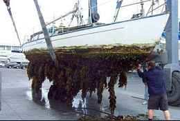 Click image for larger version  Name:fouled hull.jpg Views:28 Size:402.5 KB ID:236014