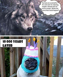 Click image for larger version  Name:wolf worse that can happen.jpg Views:237 Size:51.6 KB ID:242627