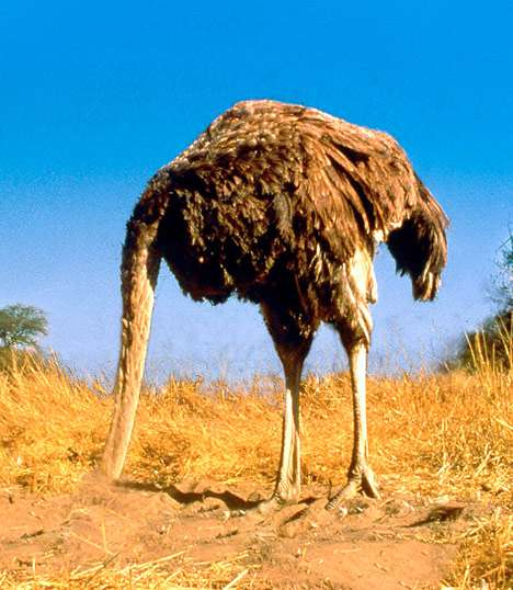 Click image for larger version  Name:ostrich_head_in_sand.jpg Views:119 Size:39.7 KB ID:28894