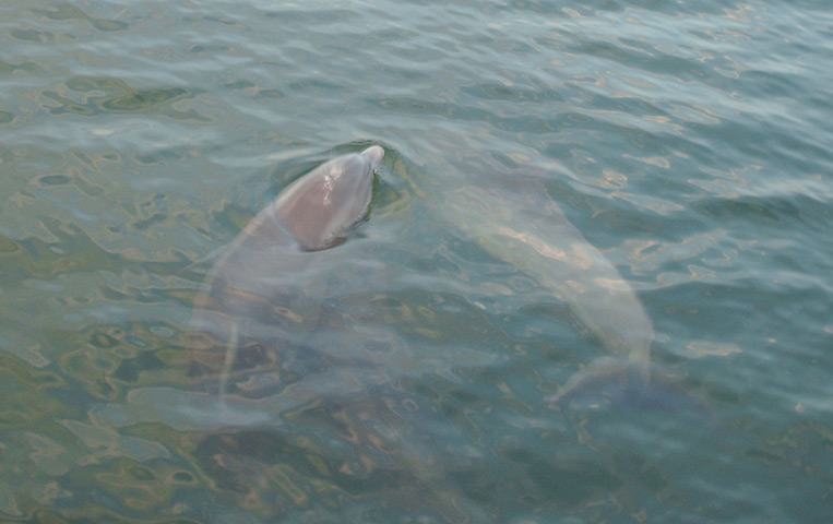Click image for larger version  Name:Dolphin1.jpg Views:87 Size:84.6 KB ID:2924