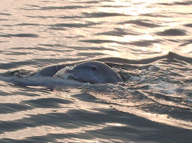 Click image for larger version  Name:DolphinSmile.jpg Views:97 Size:106.6 KB ID:2925