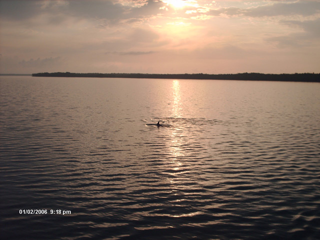 Click image for larger version  Name:DolphinsSunrise.jpg Views:96 Size:90.4 KB ID:2926