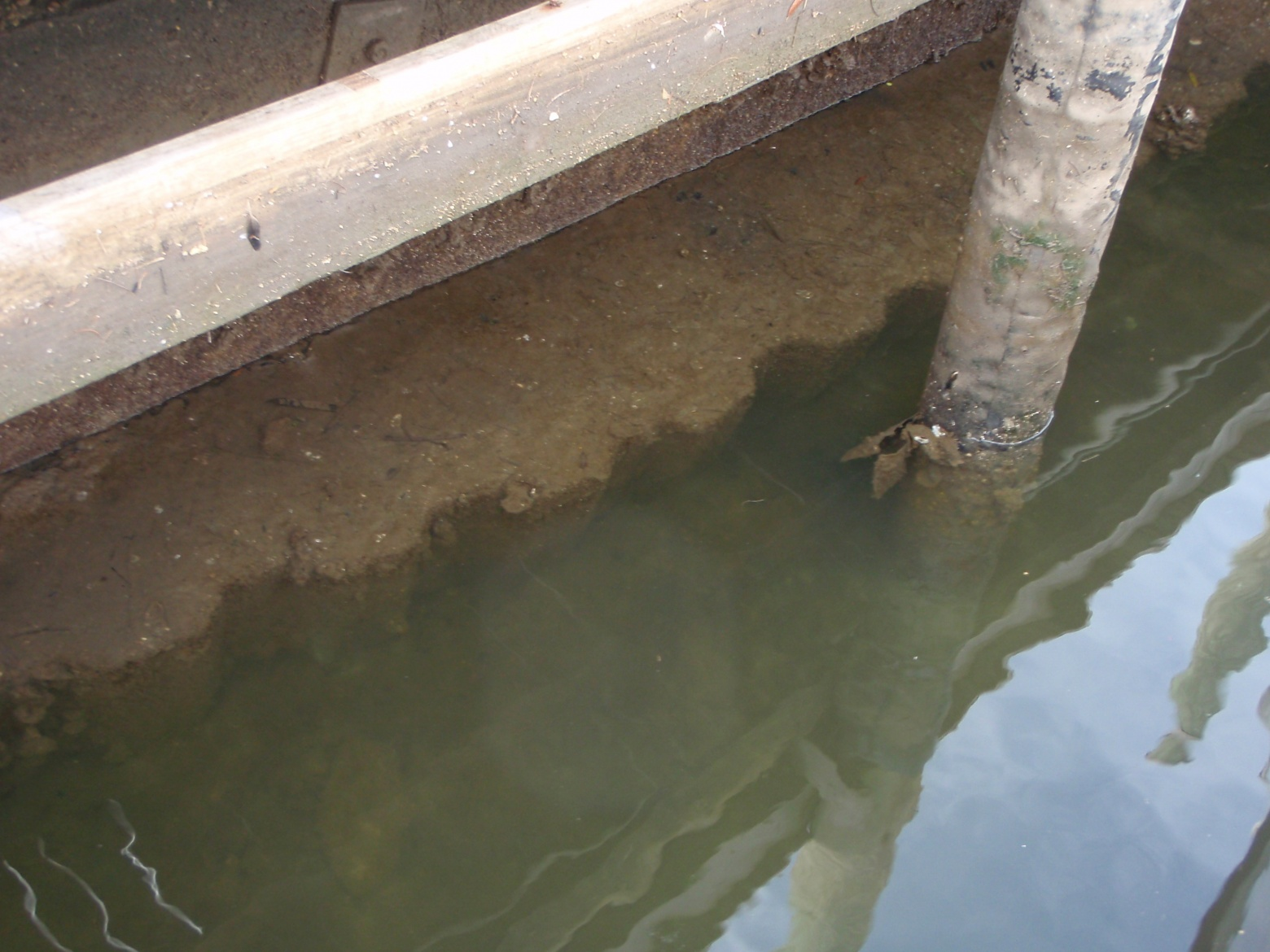 Click image for larger version  Name:Dock at low tide07.jpg.jpg Views:118 Size:404.2 KB ID:29307