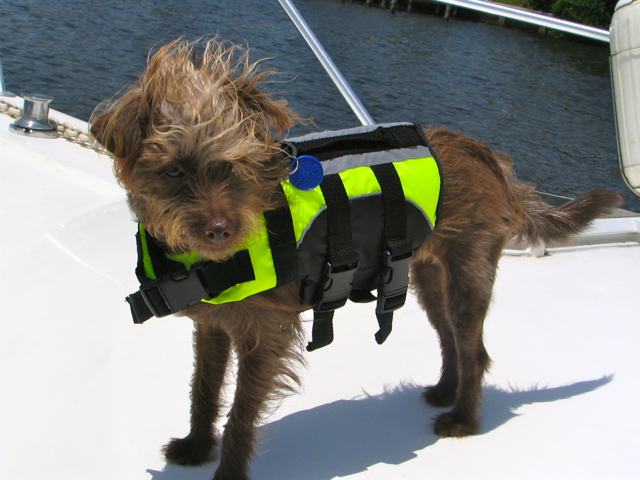 Click image for larger version  Name:boater dog.jpg Views:120 Size:357.8 KB ID:31508