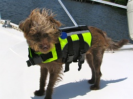 Click image for larger version  Name:boater dog.jpg Views:155 Size:357.8 KB ID:31508