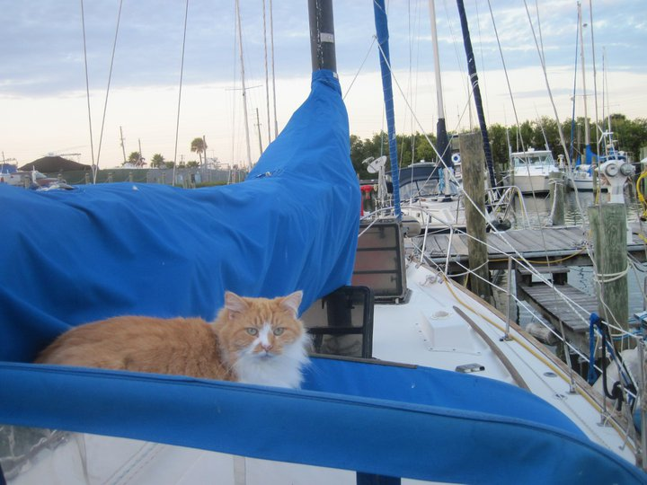 Click image for larger version  Name:cat.jpg Views:104 Size:74.2 KB ID:31969
