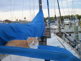 Click image for larger version  Name:cat.jpg Views:130 Size:74.2 KB ID:31969