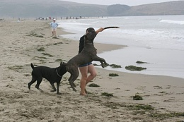 Click image for larger version  Name:Sparky%20on%20beach%206-08.jpg Views:102 Size:54.5 KB ID:32271
