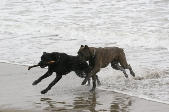 Click image for larger version  Name:Sparky%20on%20beach%207%206-08.jpg Views:84 Size:55.4 KB ID:32272