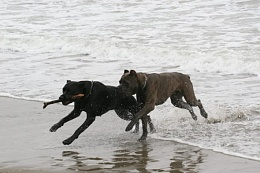 Click image for larger version  Name:Sparky%20on%20beach%207%206-08.jpg Views:103 Size:55.4 KB ID:32272