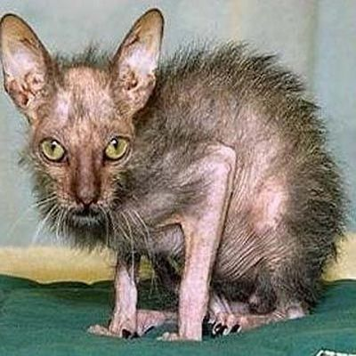 Click image for larger version  Name:ugly_cats_04.jpg Views:6467 Size:35.4 KB ID:34315