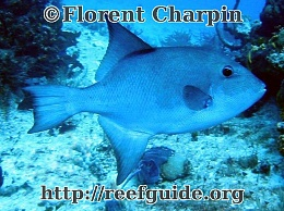 Click image for larger version  Name:oceantrigger1.jpg Views:172 Size:98.6 KB ID:34477