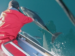 Click image for larger version  Name:EuDollDolphin.jpg Views:143 Size:87.7 KB ID:35598