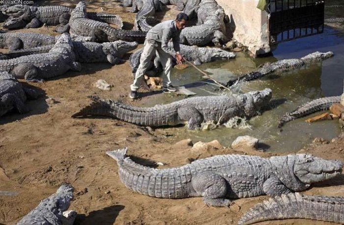 Click image for larger version  Name:Crocodile Herder.jpg Views:272 Size:84.2 KB ID:39330