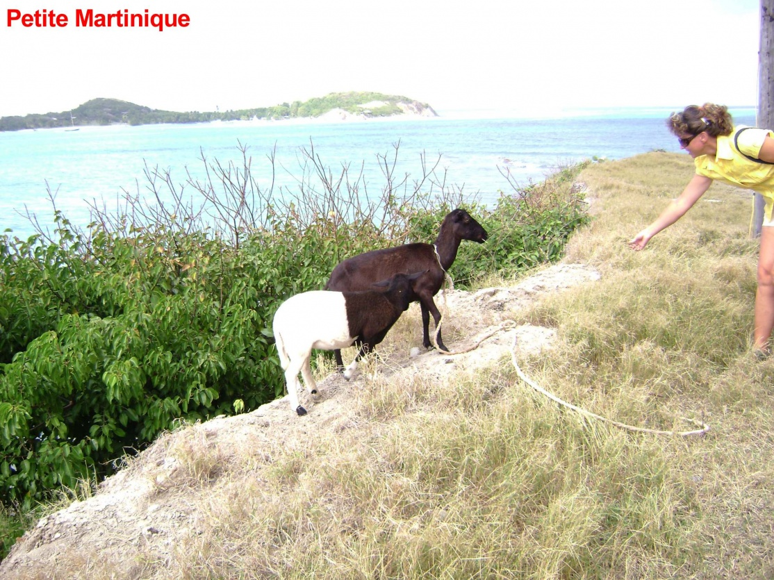 Click image for larger version  Name:PetiteMartinique1006.jpg Views:76 Size:464.2 KB ID:41275