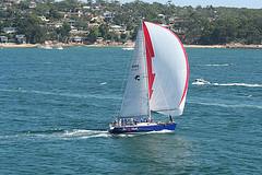 Name:  Sea Hawk3.jpg Views: 505 Size:  20.8 KB