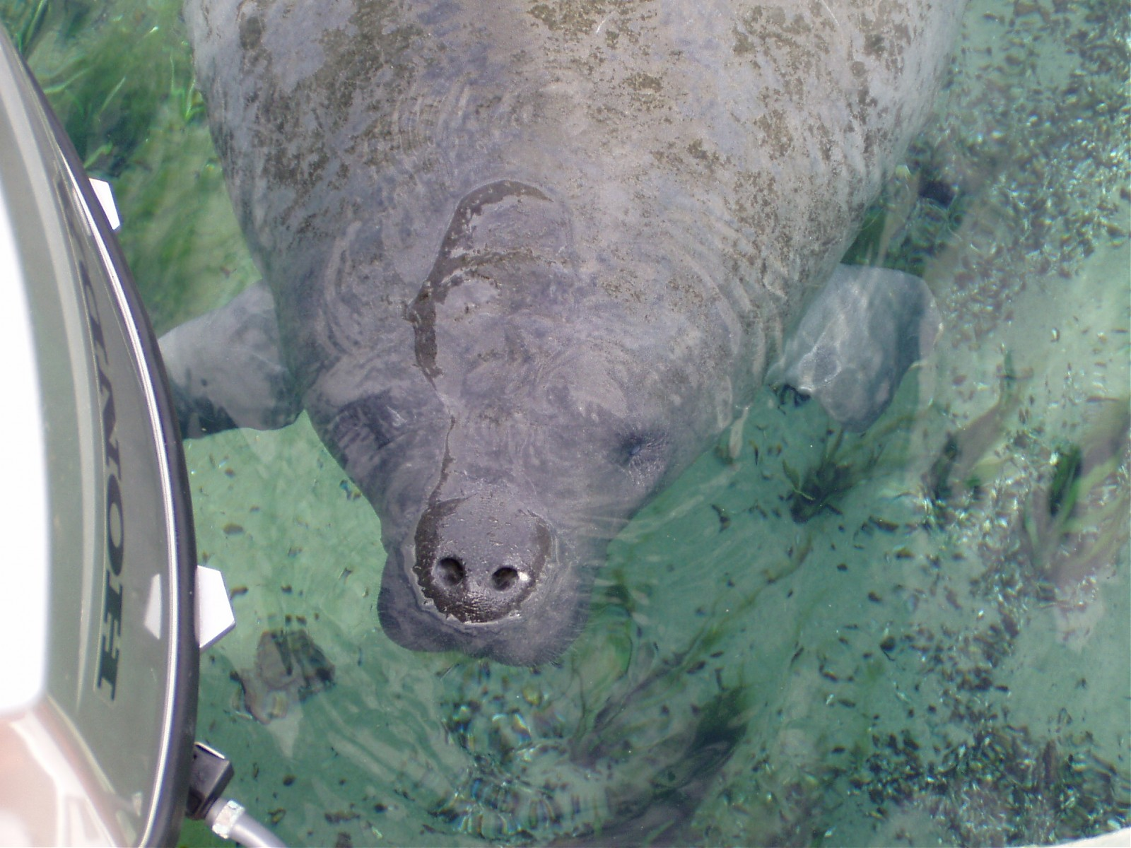 Click image for larger version  Name:WW Manatee014.jpg Views:191 Size:374.3 KB ID:4633