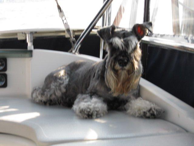 Click image for larger version  Name:Mal sailing.jpg Views:124 Size:41.7 KB ID:49240