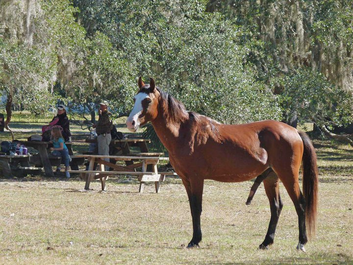 Click image for larger version  Name:horse.jpg Views:64 Size:156.7 KB ID:49761