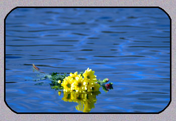 Click image for larger version  Name:flowers_water.jpeg Views:163 Size:23.8 KB ID:50192