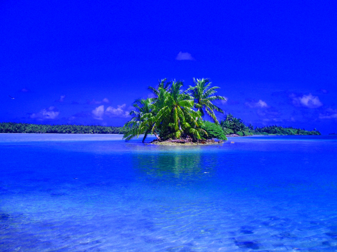 Click image for larger version  Name:Palmyra Atoll a.jpg Views:113 Size:417.3 KB ID:50372