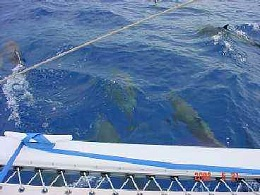 Click image for larger version  Name:dolphin.JPG Views:99 Size:13.2 KB ID:52186