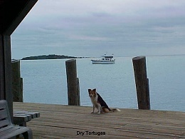 Click image for larger version  Name:26 DRY TORTUGAS Buddy.JPG Views:139 Size:96.5 KB ID:52230