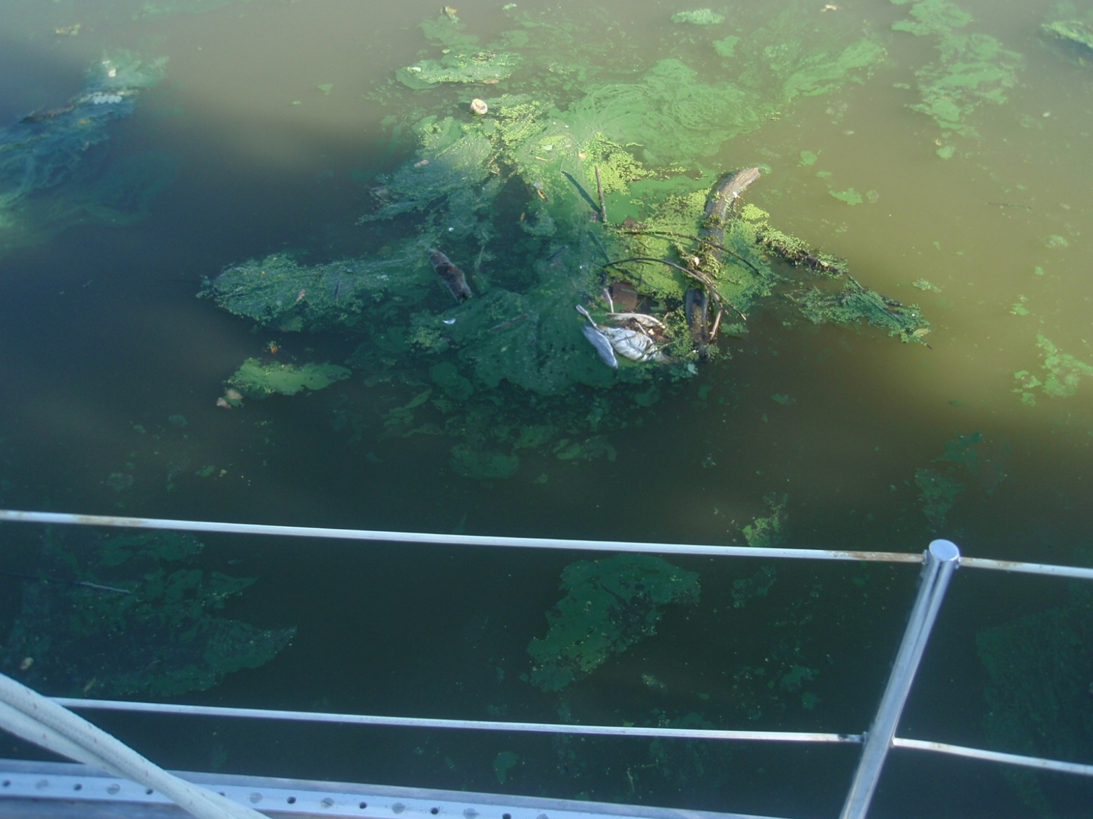 Click image for larger version  Name:P8140077 FOX RIVER sewer.jpg Views:117 Size:393.0 KB ID:52241