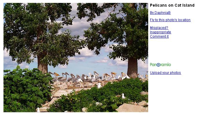 Click image for larger version  Name:PELICANS.jpg Views:54 Size:81.7 KB ID:52245