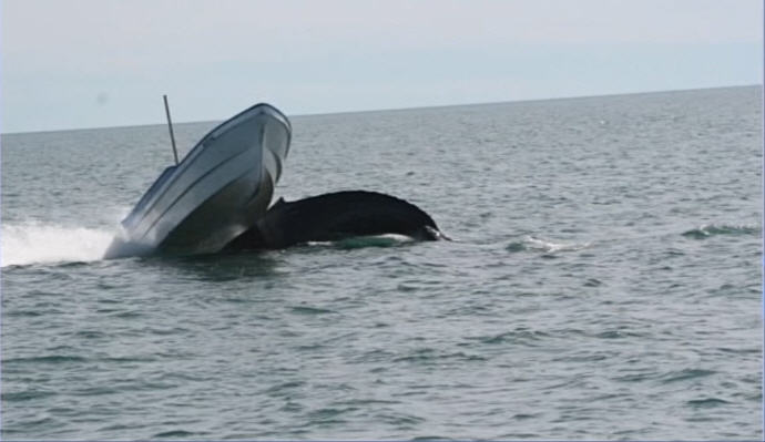 Click image for larger version  Name:whale 1.jpg Views:131 Size:37.1 KB ID:54334