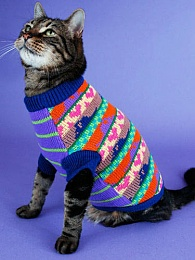 Click image for larger version  Name:Cat with sweater.jpg Views:102 Size:43.5 KB ID:56326