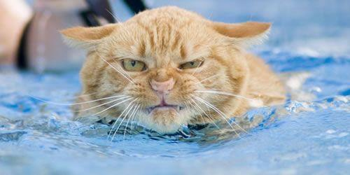 Click image for larger version  Name:Cat.jpg Views:438 Size:20.0 KB ID:58654