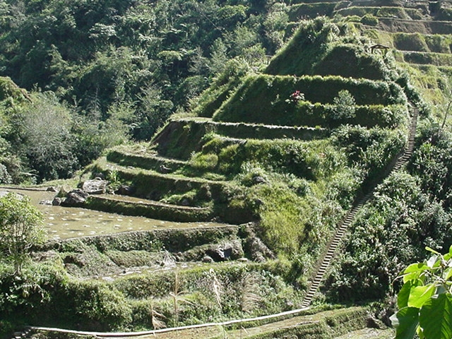 Click image for larger version  Name:Banaue trrc steps.JPG Views:96 Size:341.5 KB ID:6122
