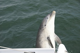 Click image for larger version  Name:04-Dolphin 138.jpg Views:282 Size:300.6 KB ID:61879