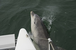 Click image for larger version  Name:07-Dolphin 094.jpg Views:283 Size:307.7 KB ID:61880